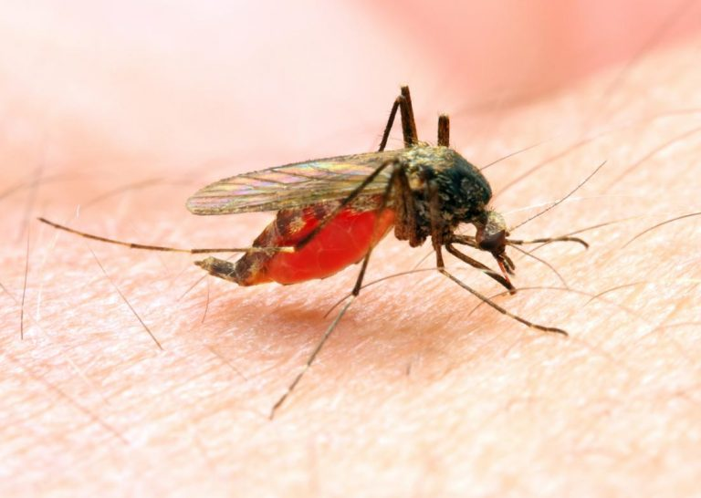 Malaria Disease Children Prevention Drug